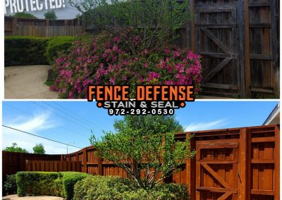 Old Fence Restaining Before and After Pics